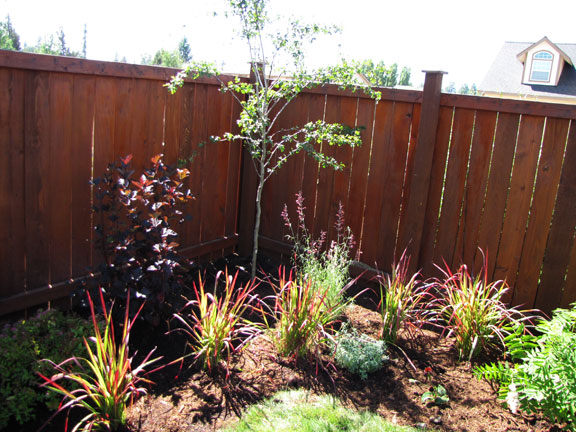Back yard planting.