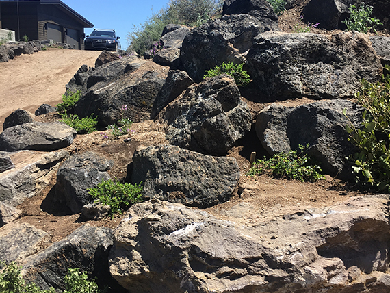 Native, mossy boulders create natural planting terraces as a solution for 9 feet of elevation change.